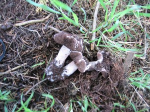 24042010_cypressagaric_side_2048x1536