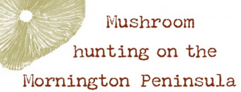 www.mushroomtours.com